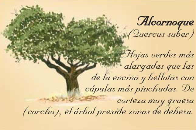 Alcornoque-en-Sierra-de-Andujar