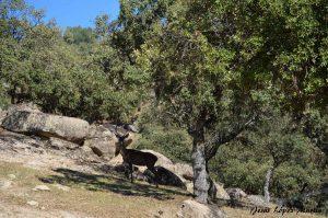 Ciervo en coto de caza Sierra de Andújar
