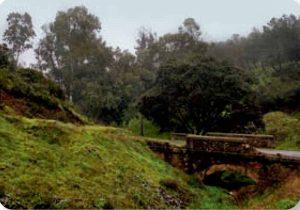 Sendero-el-Centenillo-puente