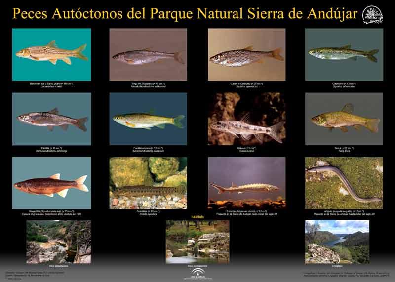 Sierra-de-Andujar-Peces-Autoctonos