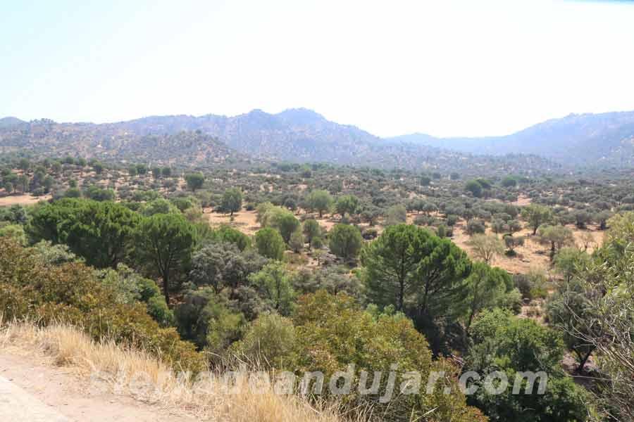 sierra-de-andujar-61 ruta encinarejo