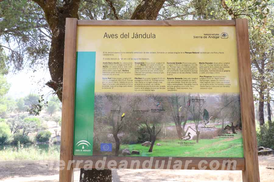sierra-de-andujar-66 ruta encinarejo