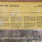 sierra-de-andujar-67 ruta encinarejo