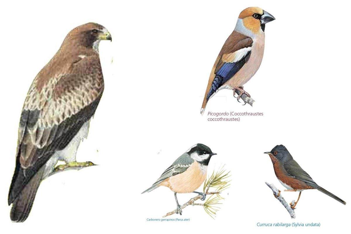 aves Sierra de Andújar