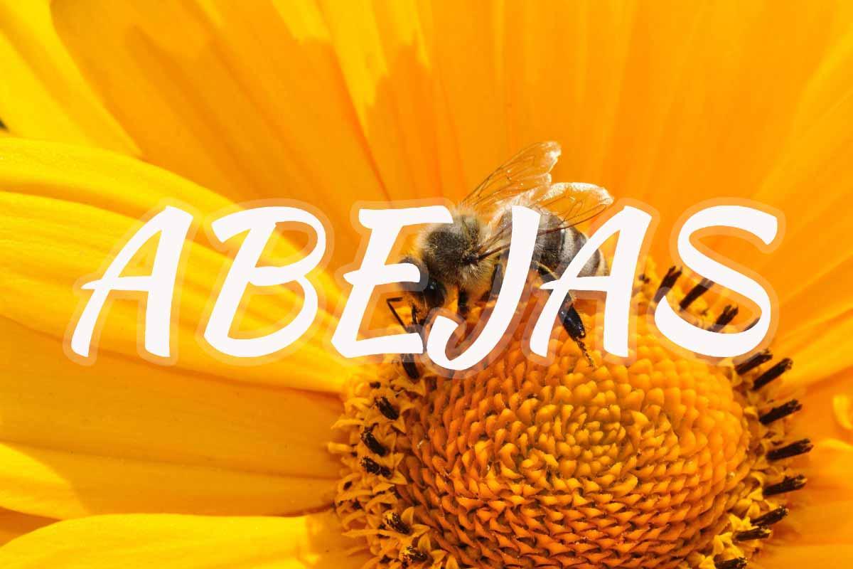 miel de abejas sierra de andujar