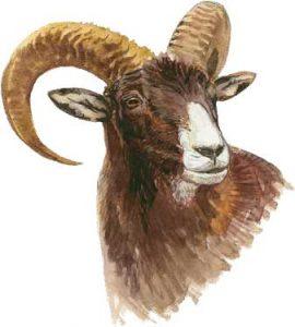 muflon dibujo