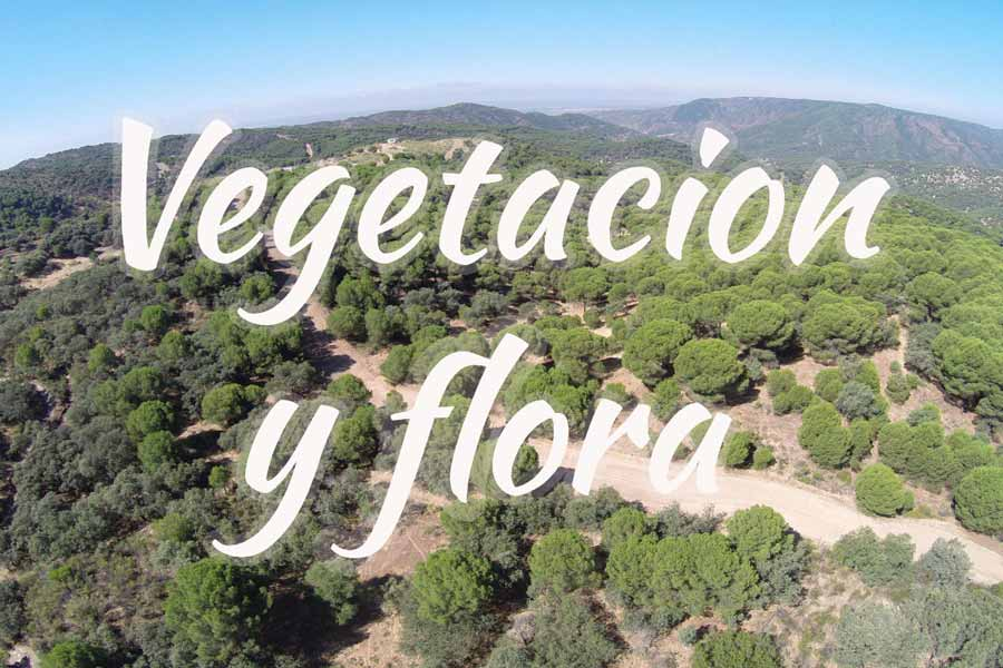 vegetacion-flora-sierra-andujar