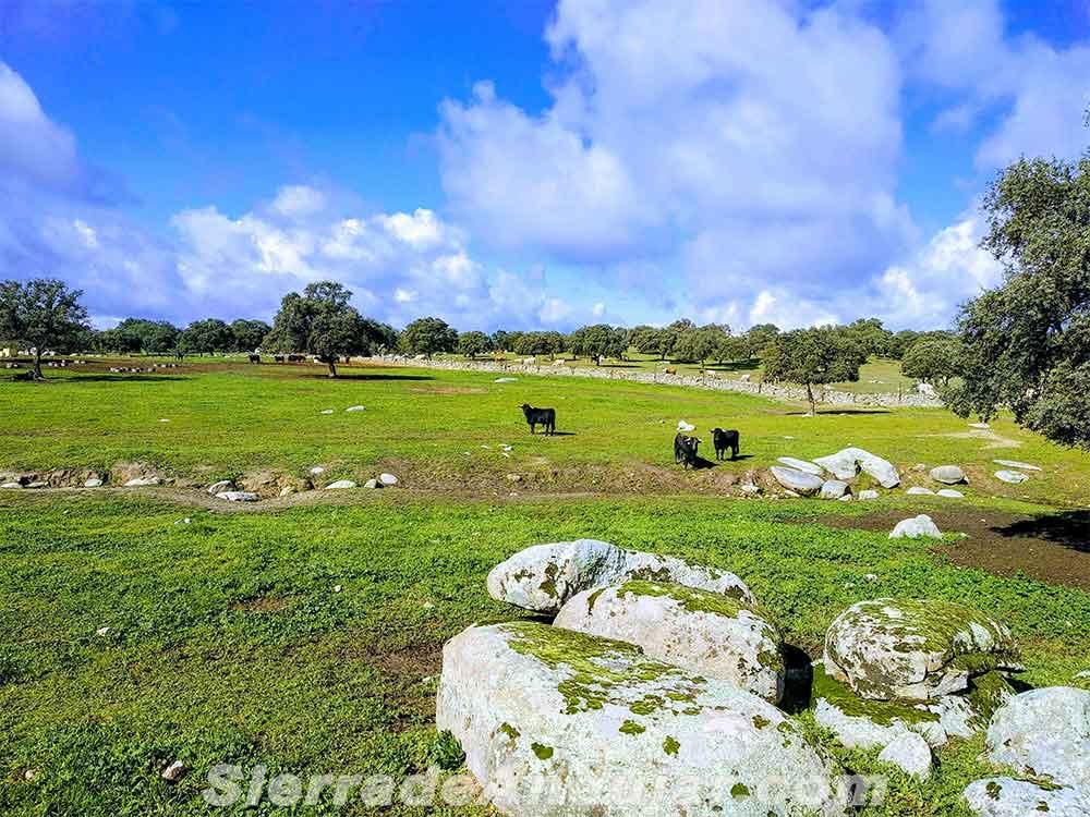 Dehesa ganadería toros Medianería