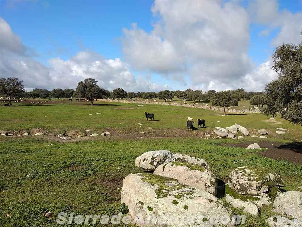 Toros ganadería Andújar
